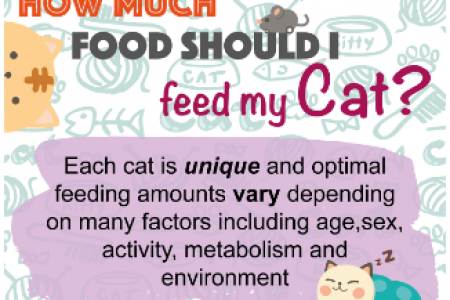 How Much Should I Feed My Cat? Infographic