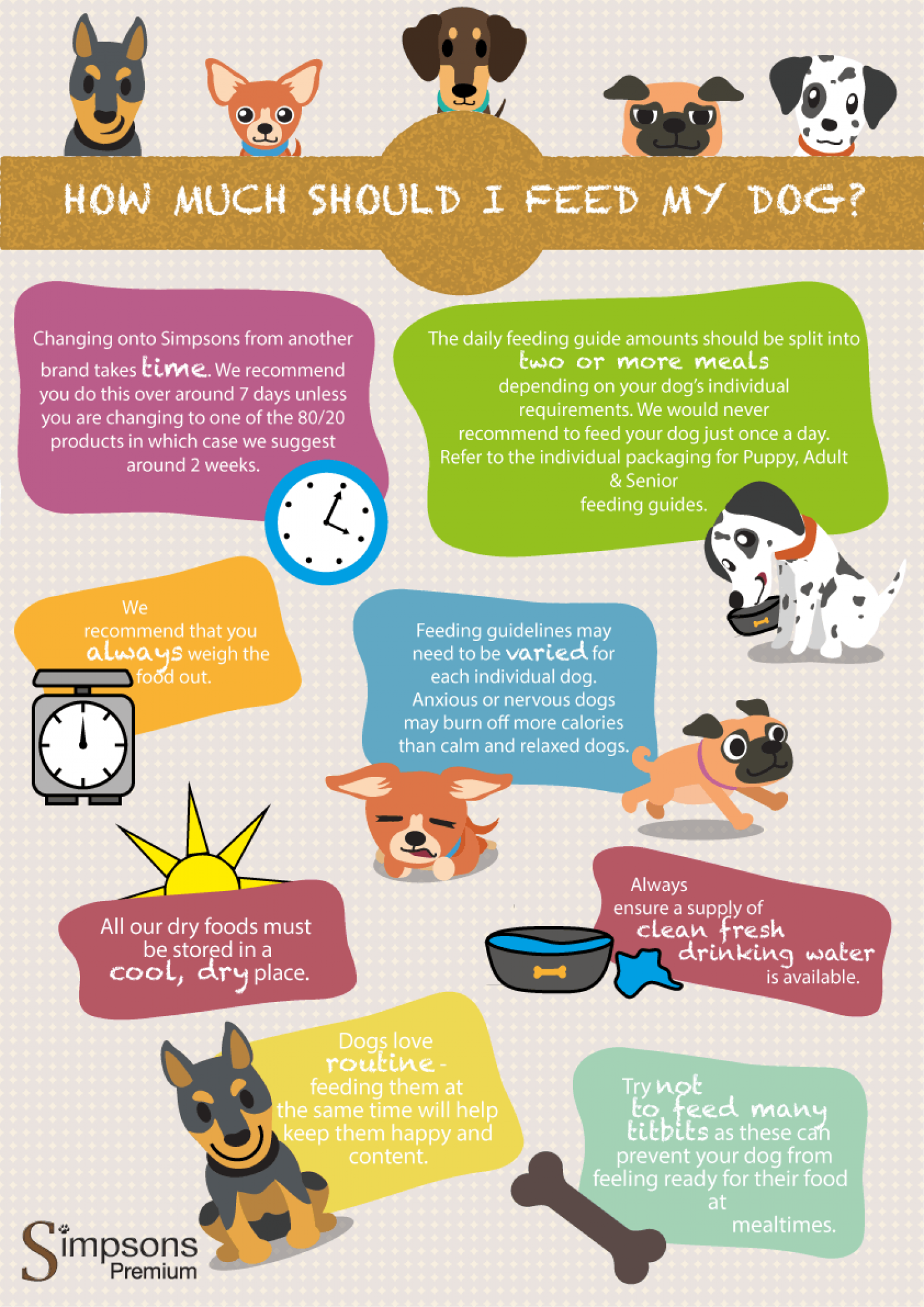 How Much Should I Feed My Dog? Infographic