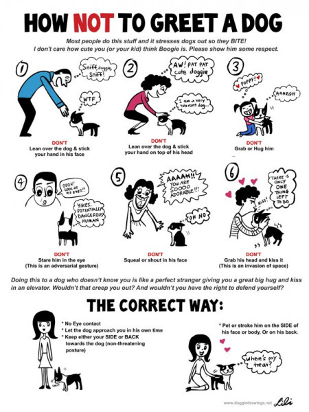 How *Not* To Great a Dog Infographic