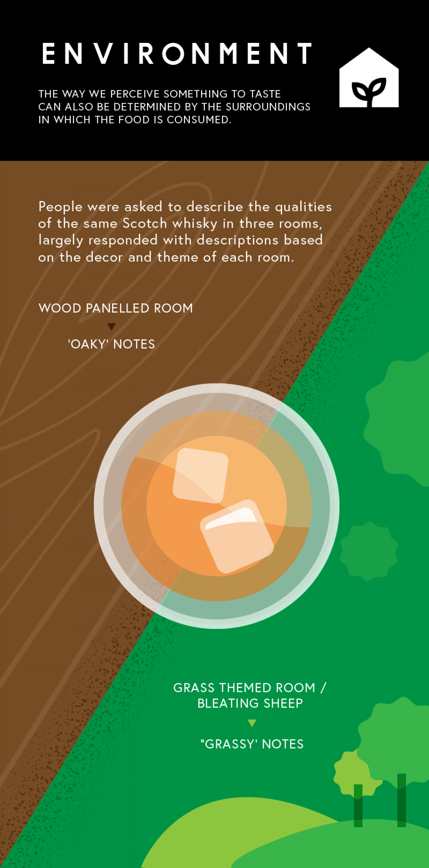 How Our Environment Affects Taste Perceptions  Infographic