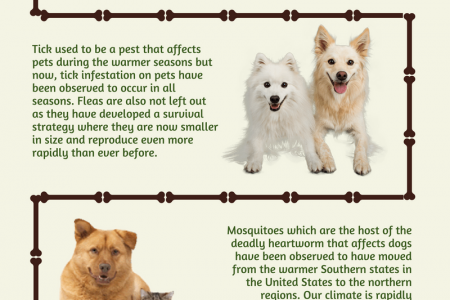 How Pets Are Being Affected By A Changing Climate Infographic