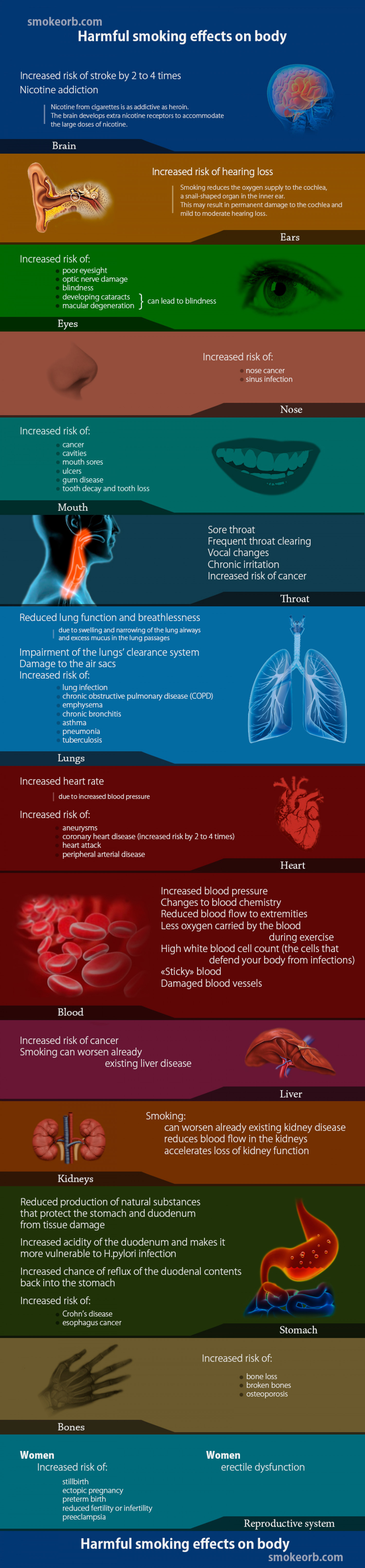 How smoking affects our body Infographic