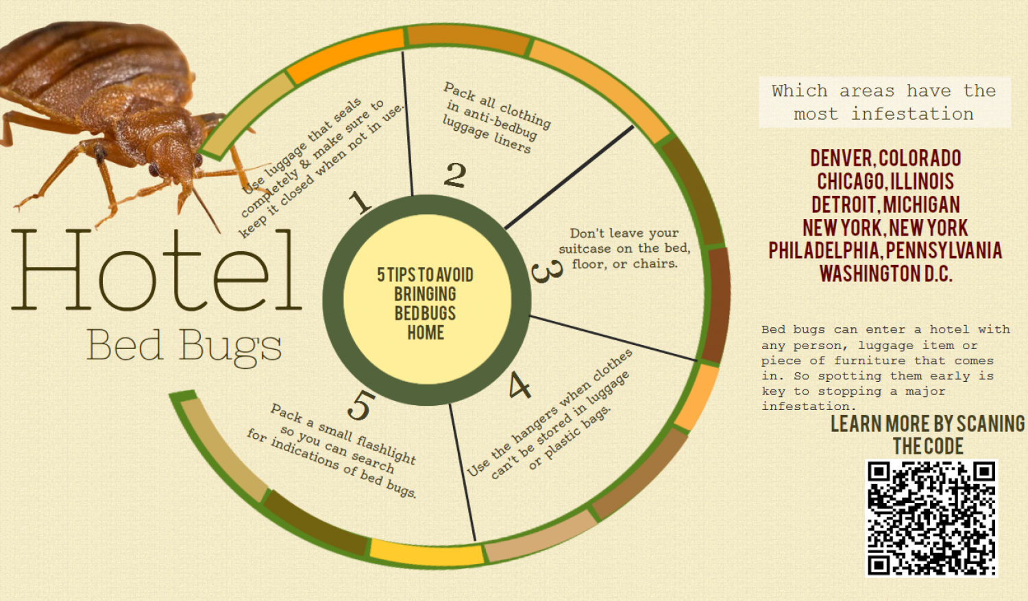 How to avoid hotel bed bugs  Infographic