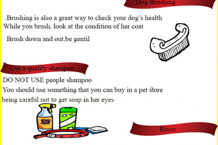 How to bathe your dog ? Infographic