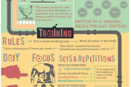 How to Build Muscles Fast ? A Simple Infographic Guide Infographic