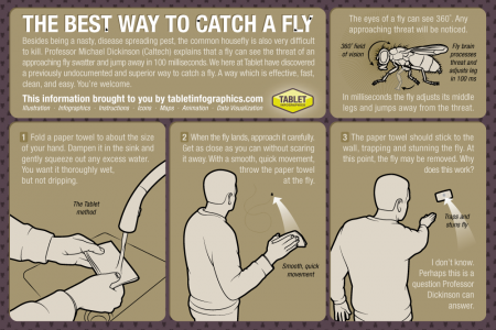How to Catch a Fly Infographic
