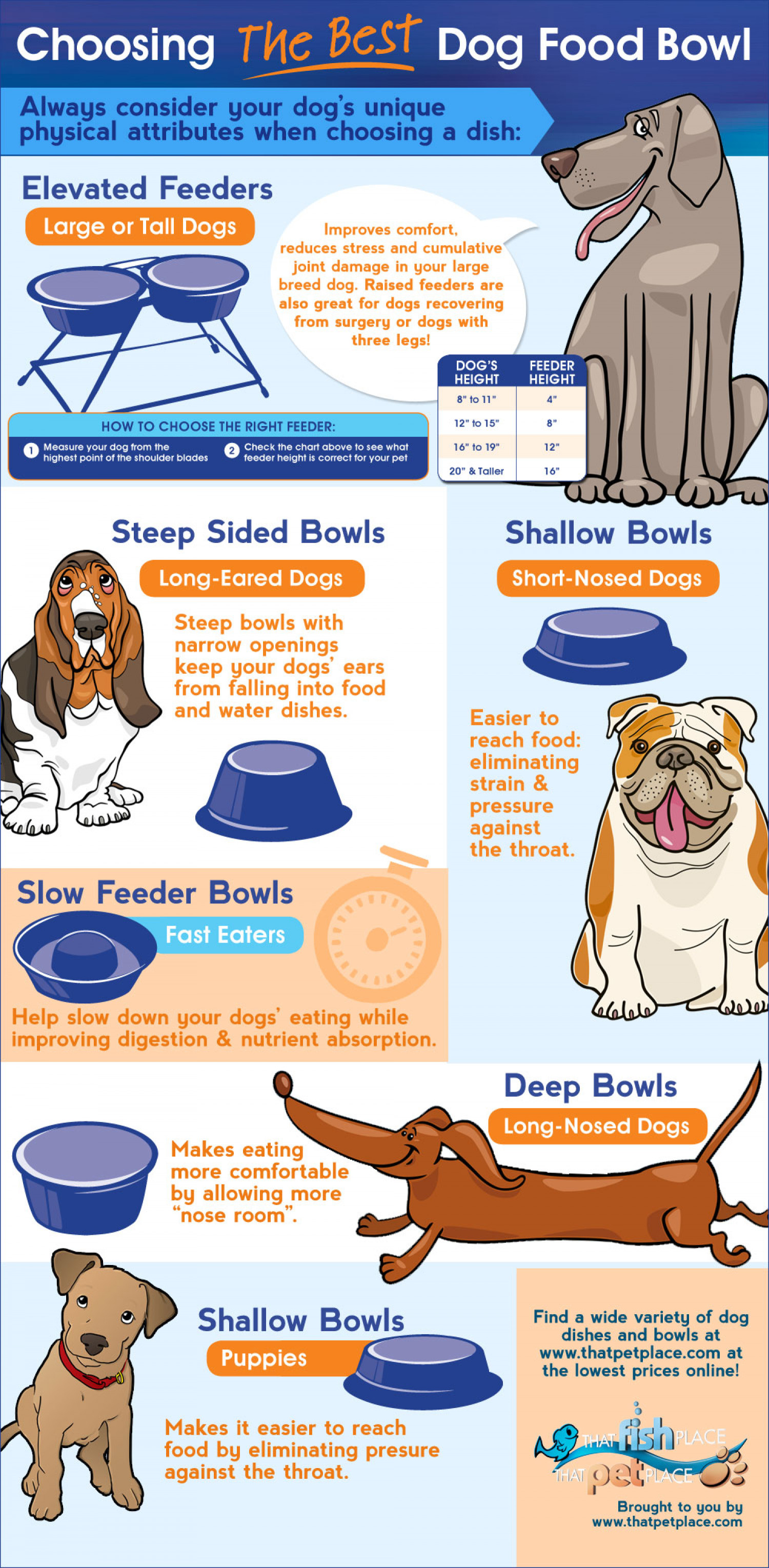 How to choose the best bowl for your dog's breed Infographic