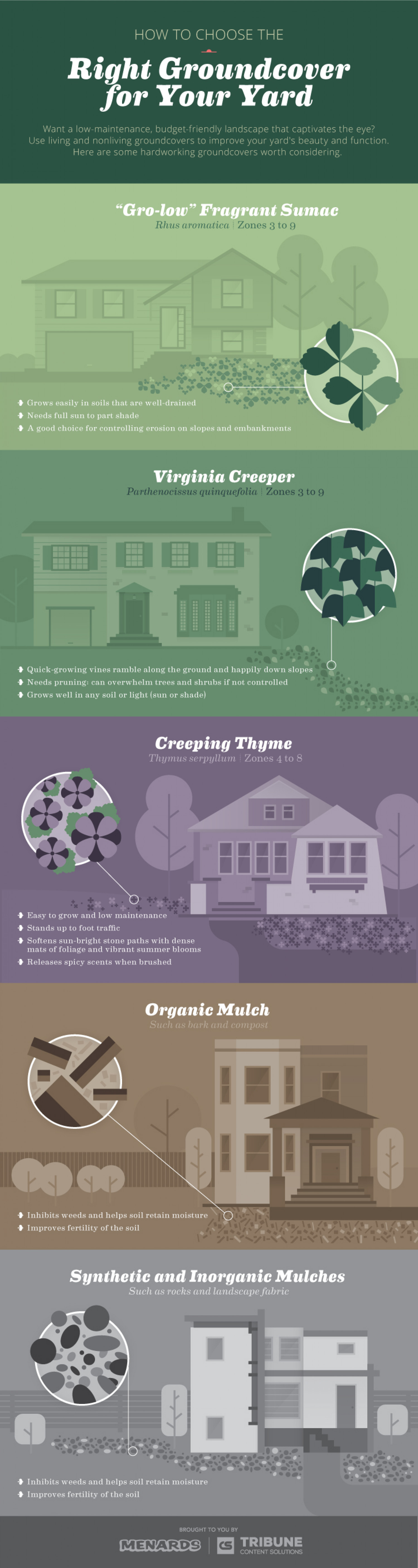 How to Choose the Right Groundcover for Your Yard Infographic