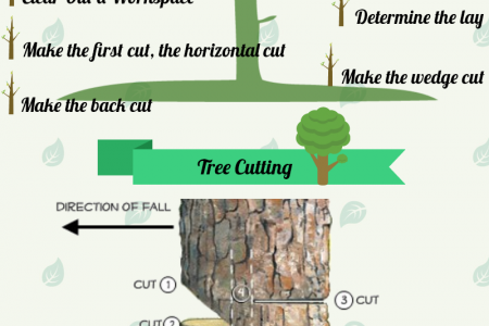 How To Fell Large Tree Infographic