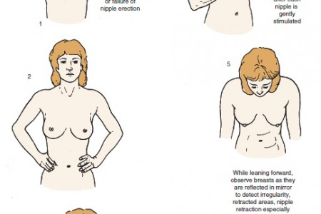 how to get bigger boobs Infographic