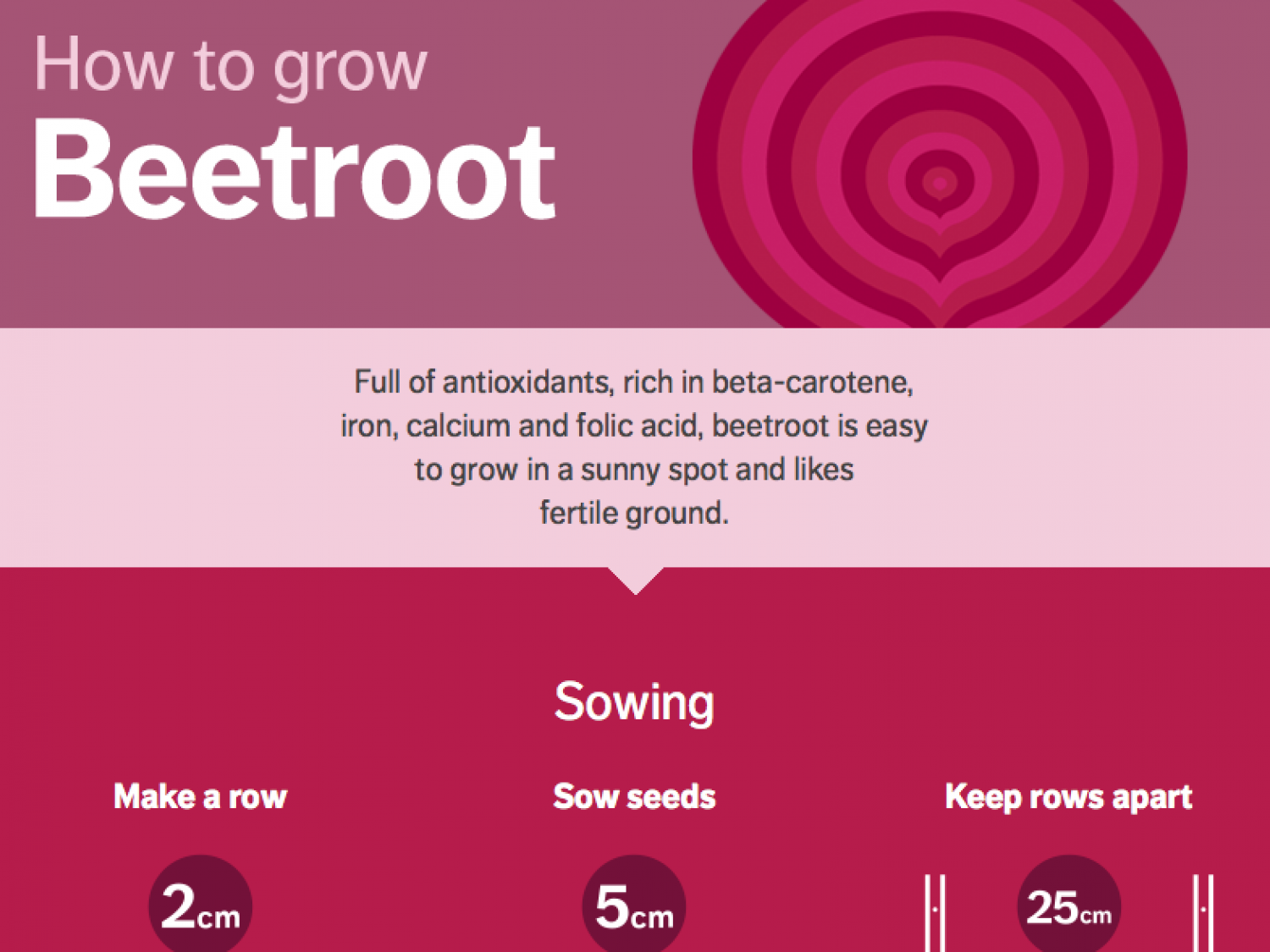 How to Grow Beetroot Infographic
