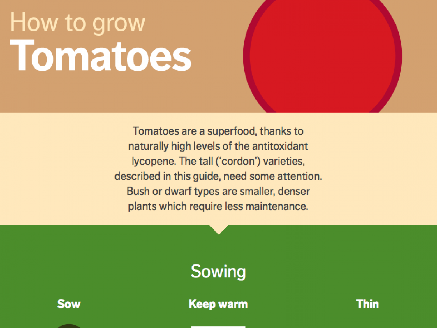 How to Grow Tomatoes Infographic