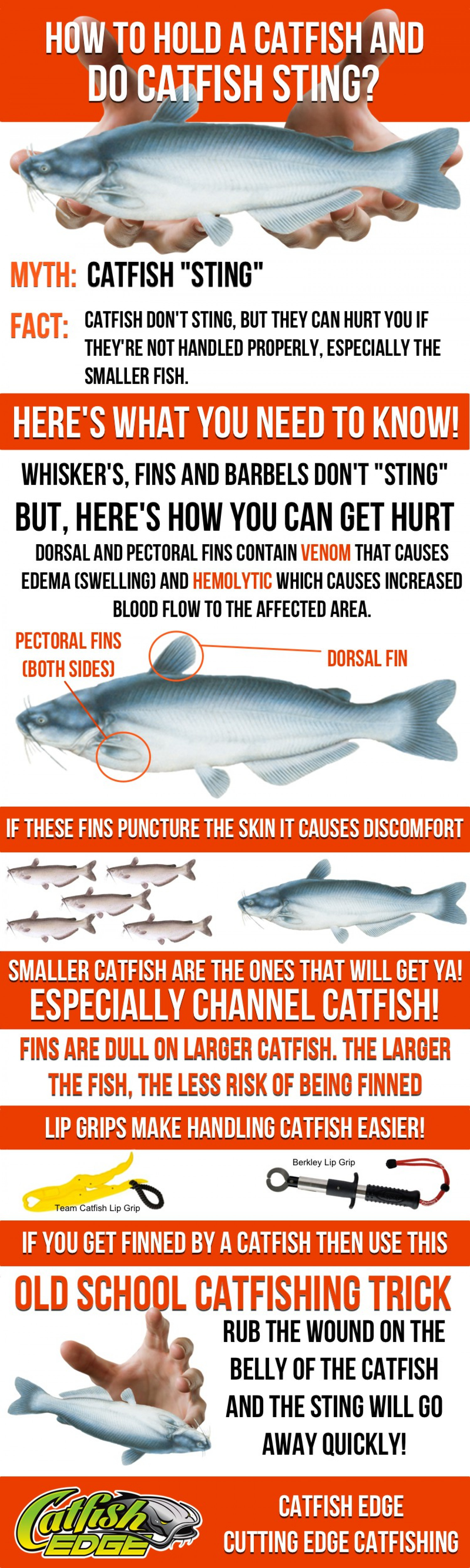 How To Hold a Catfish (and Do Catfish Sting) Infographic