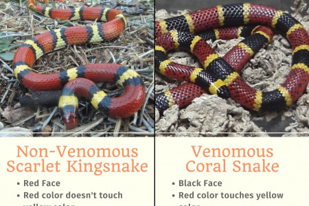 How to identify a venomous coral snake Infographic