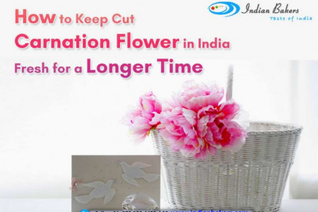 How to Keep Cut Carnation Flower in India Fresh For a Longer Time? Infographic