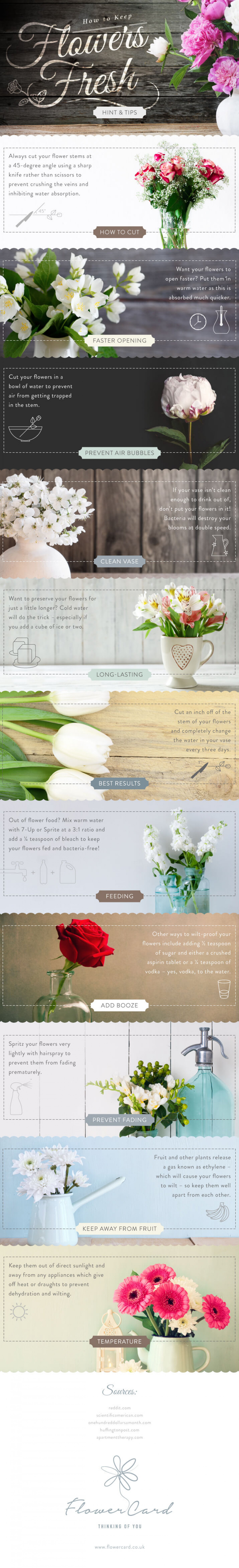 How To Keep Flowers Fresh For Longer Infographic