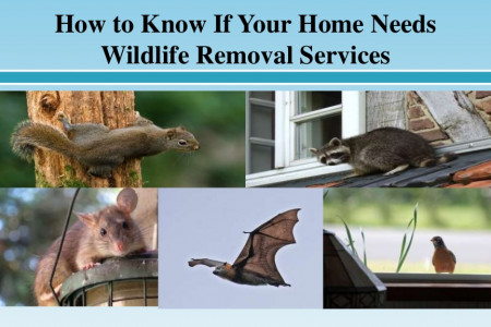 How to Know If Your Home Needs Wildlife Removal Services Infographic