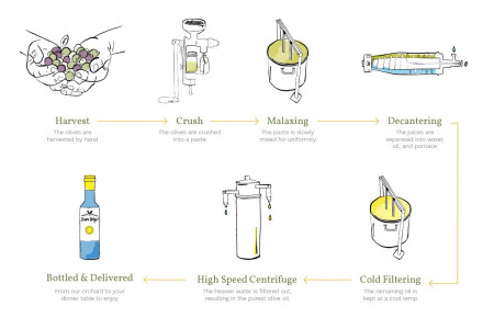 How To Make Olive Oil Infographic