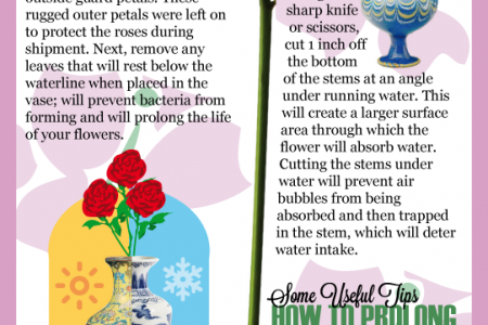 How To Make Your Roses Last Infographic