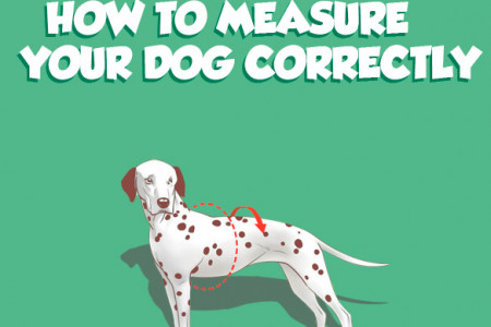 How to measure your dog Infographic