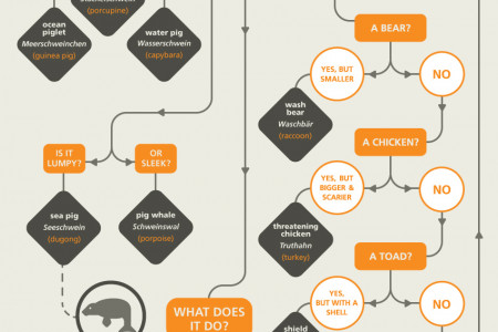 How to Name Animals in German Infographic