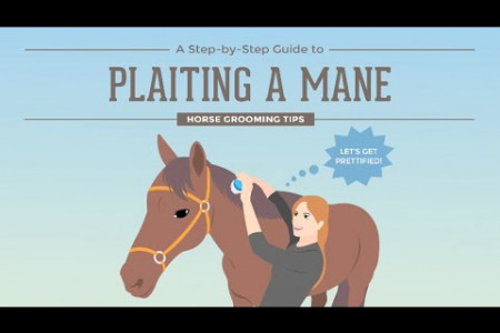 How to Plait a Horse's Mane Infographic