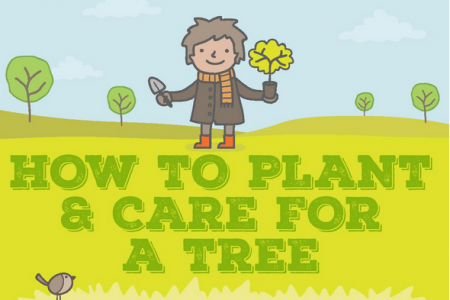 How to Plant and Care For a Tree Infographic