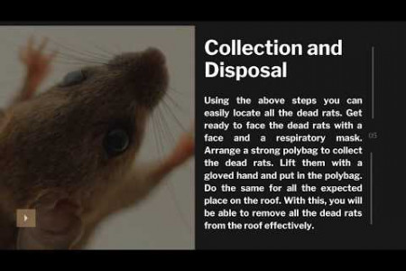 How to Remove a Dead Rats from your Roof? Infographic