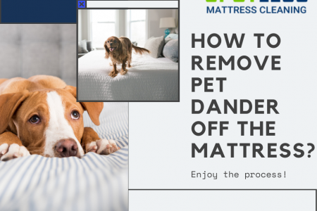 How to Remove Pet Dander Off the Mattress?  Infographic