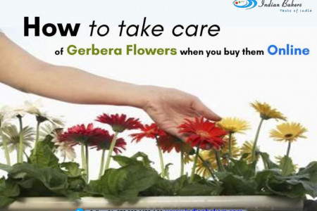 How to take care of Gerbera Flowers when you buy them online? Infographic