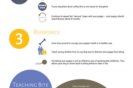 How to Train Your Dog Not to Bite Infographic