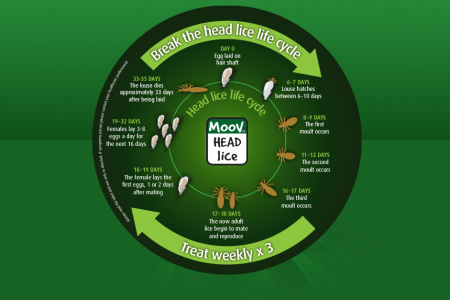 How to Treat Head Lice According to Their Life Cycle Infographic