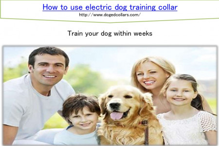 How to use electric dog training collar Infographic