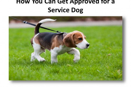 How You Can Get Approved for a Service Dog Infographic