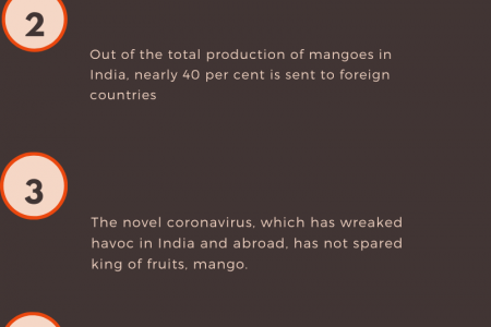 Impact of COVID-19 on Mango farmers Infographic