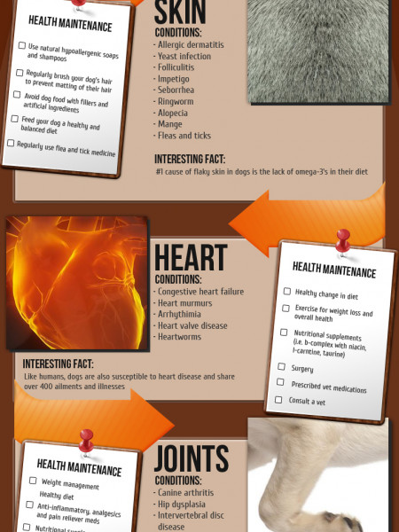 Important Facts about your Dog's Body Infographic