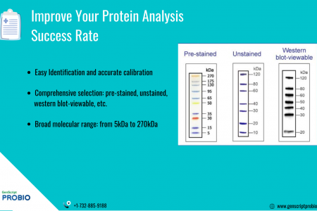 Improve your Protein Analysis Success Rate Infographic