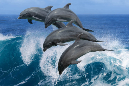 Incredible Nature of Dolphins Infographic