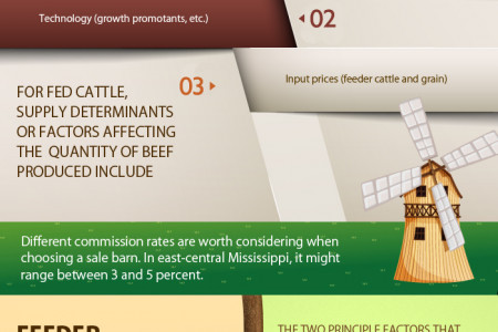Infographic about determination of Cattle Prices Infographic