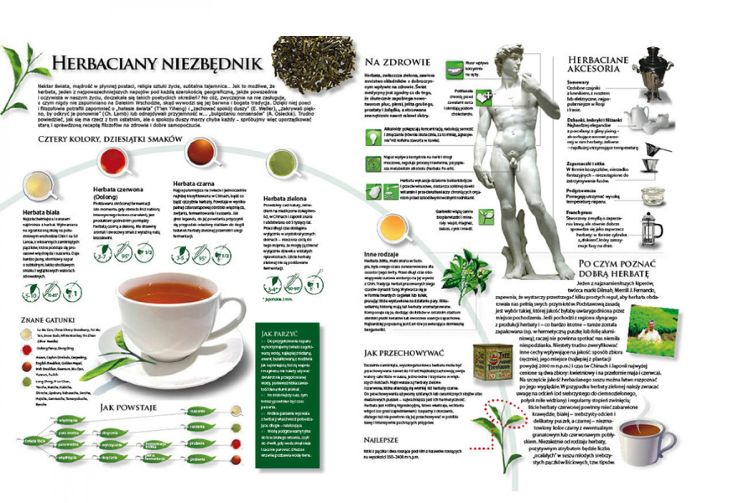 Guide to tea Infographic