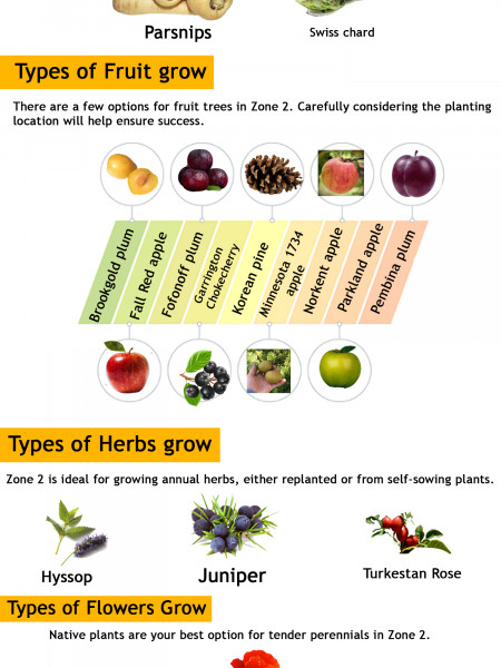 Information about Zone 2 planting Infographic