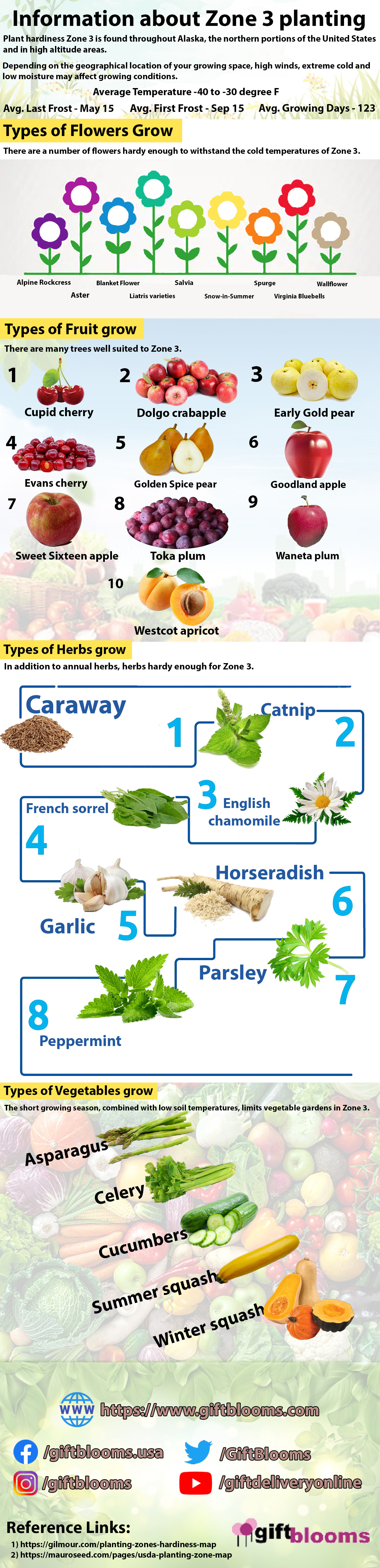 Information about Zone 3 planting Infographic