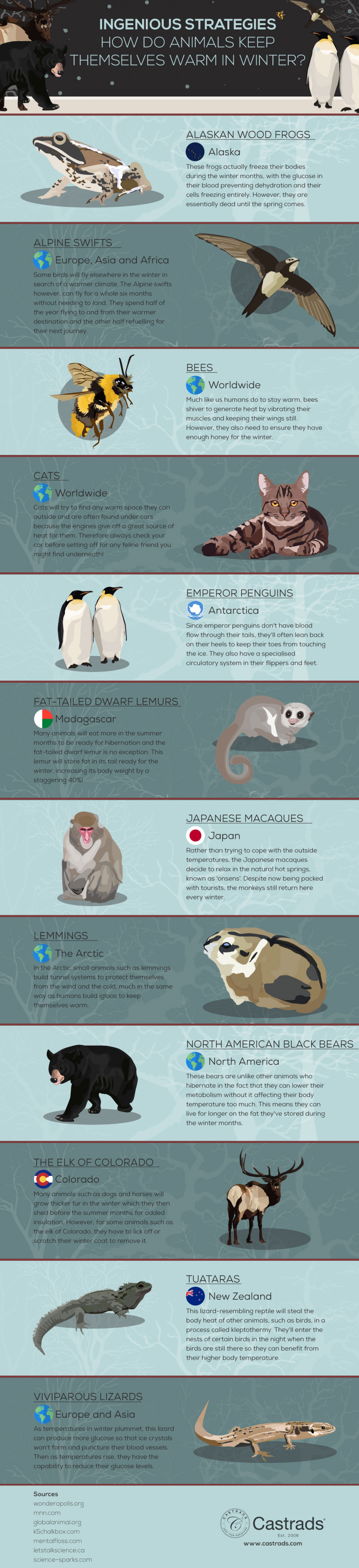 Ingenious Strategies: How Do Animals Keep Themselves Warm in Winter? Infographic