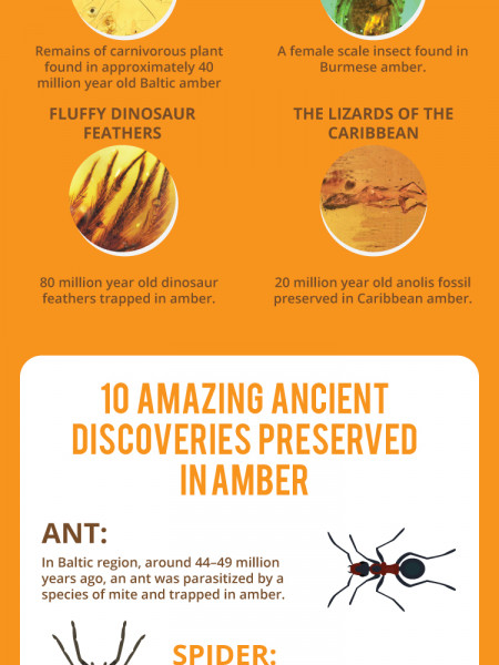 Insects Found in Amber Infographic