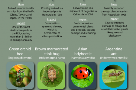 Insects That Have Invaded North America Infographic