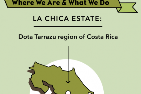 Inside Your Cup from My Coffee Farm Infographic