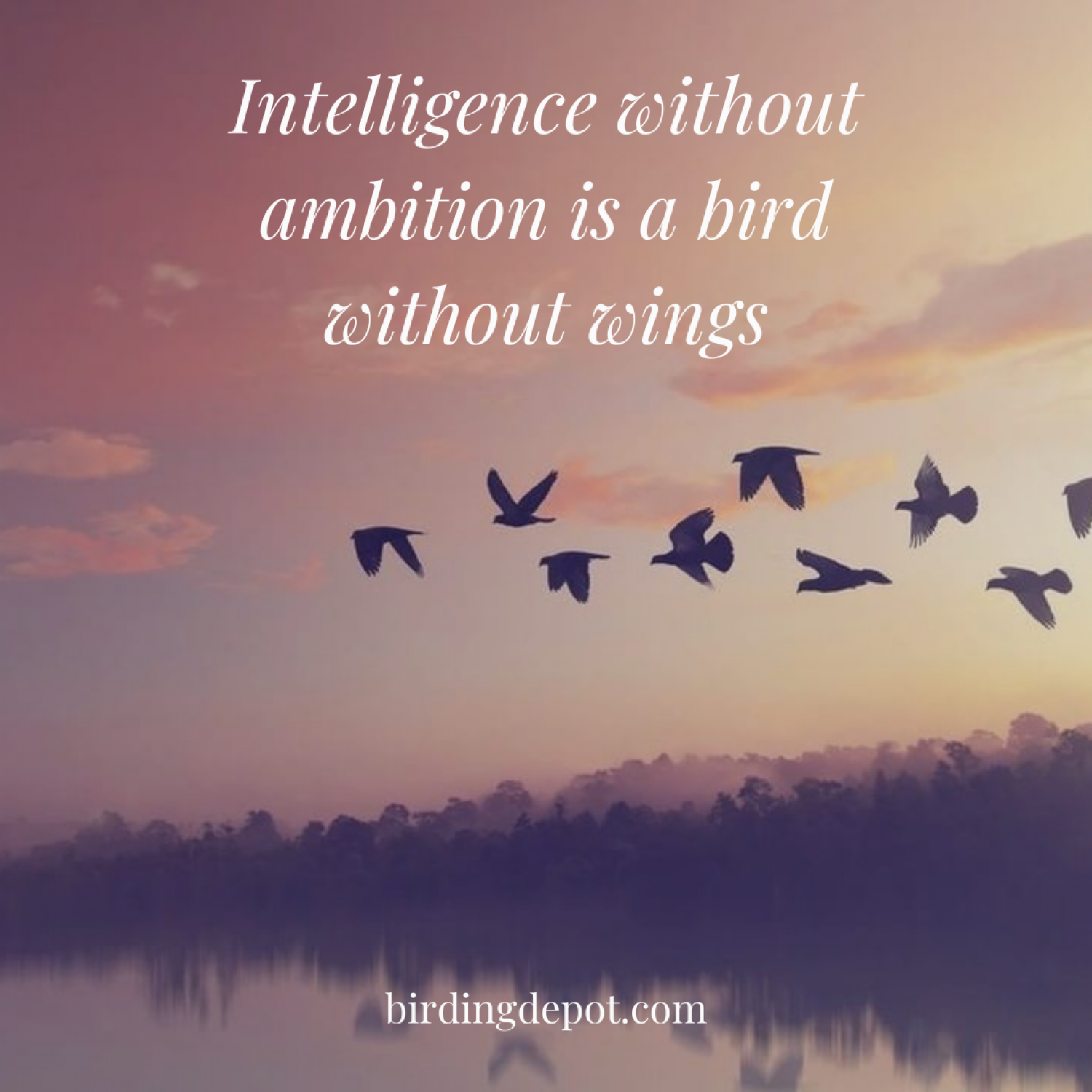 Intelligence without ambition is a bird without wings Infographic