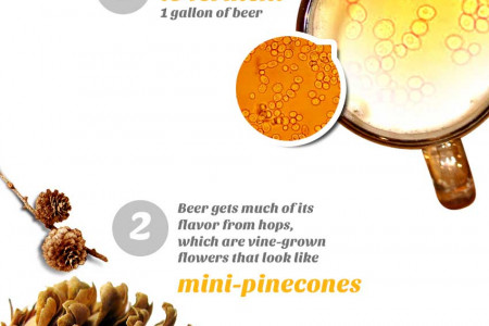 Interesting Facts About Beer Infographic