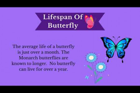 Interesting Facts About Butterfly Infographic