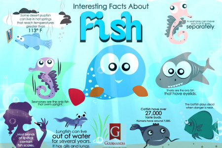 Interesting Facts About Fish Infographic